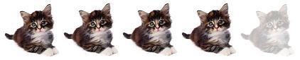 4-gatitos
