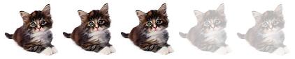 3-gatitos